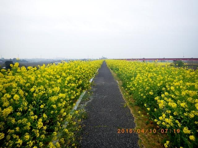 2016渡良瀬ミーティング160410 010.JPG