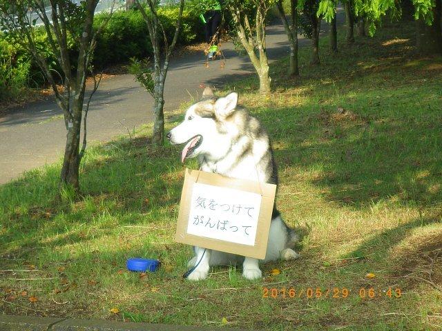 2016銚子センチュリーライド160529 071.JPG