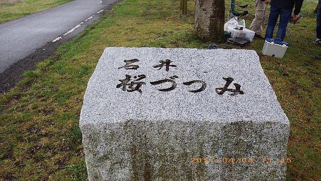どんよりとした曇天の花見ライド 008.JPG