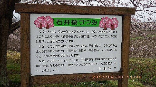 どんよりとした曇天の花見ライド 009.JPG
