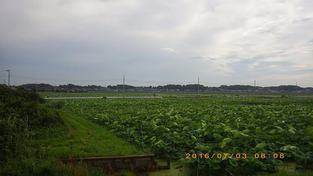 霞ヶ浦160703 008.JPG