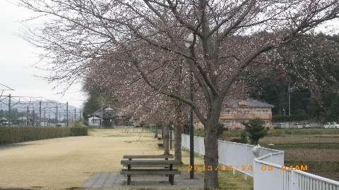 リベルタスりんりんロード2013_130324 007(1).JPG