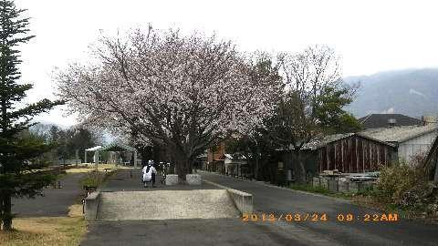 リベルタスりんりんロード2013_130324 013(2).JPG